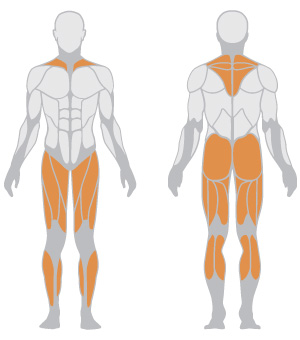 muscoli (26).jpg
