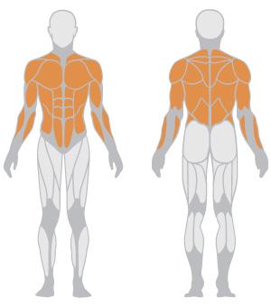 muscoli (27).jpg