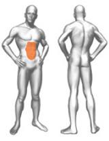 muscoli (56).jpg