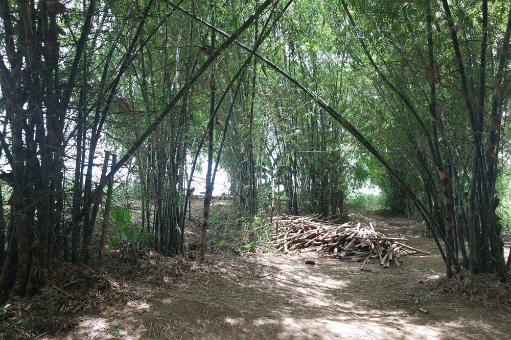 The bamboo forest gives shade and offers local building material for the first housings at An Nhien farm.
