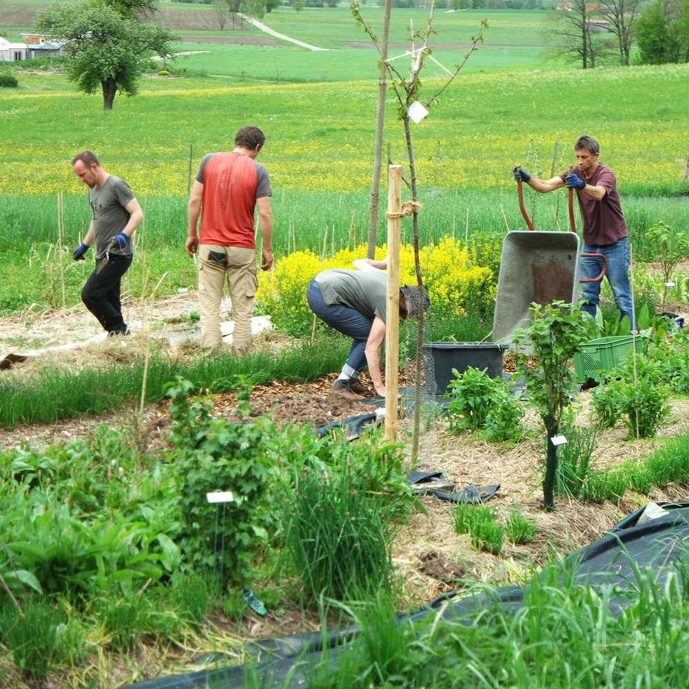 Creating a food forest in temperate climate can be a fun community activity.