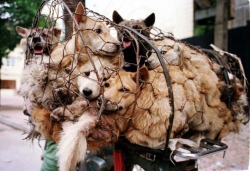 Hundene i Kina trenger desperat din hjelp! -