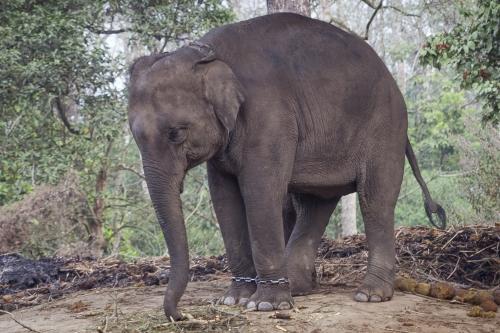 Lov at du ikke vil støtte dyreshow eller annen grov