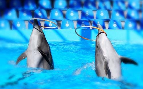 Delfinene er drevet av sult når de utfører triks -