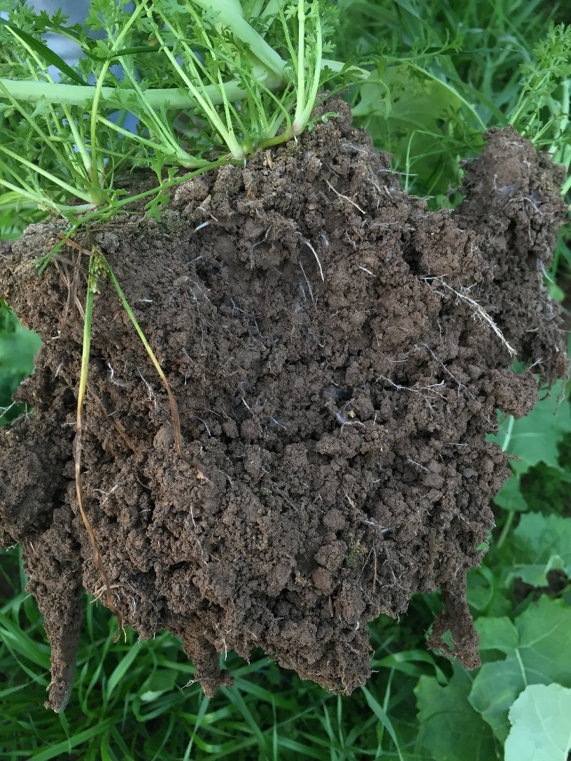BD soil structure