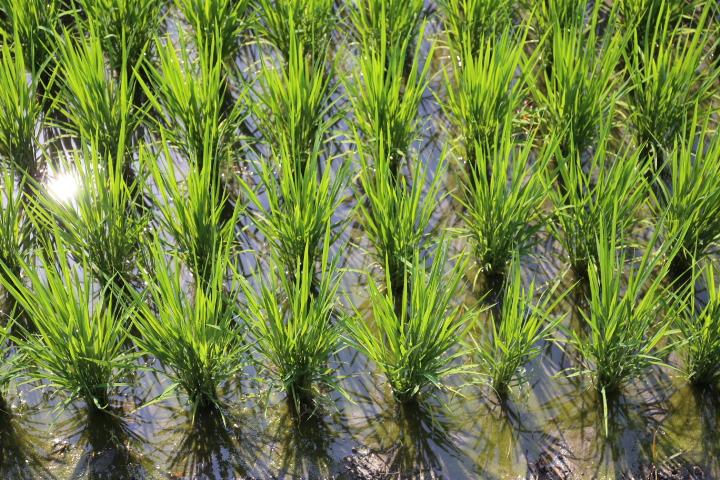 Clean water, no nutrient runoff