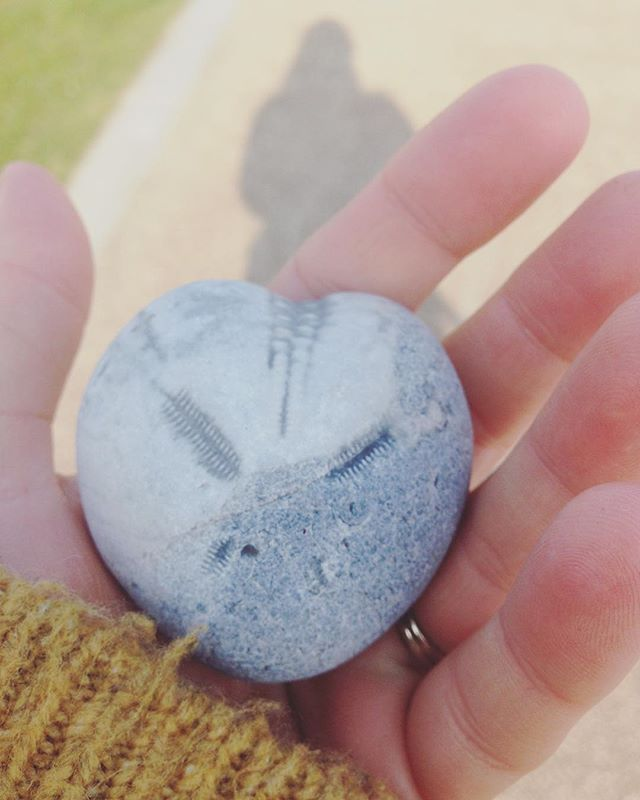 A treasure from the local beach, nature is always there ready to inspire!