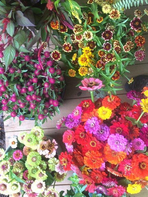 Summer Bouquet Share — Earth Blooms Flower Farm