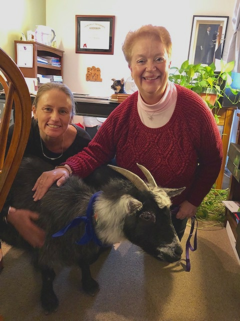 """F&M was happy to support Monroe County Humane Association on Random Acts of Kindness Day on Feb. 15, 2019. Annie the goat made a """"surprise"""" visit to Paige's office—too bad Paige was out! In the background, Toad, the German Sheppard puppy, filled in for Paige for a little while."""