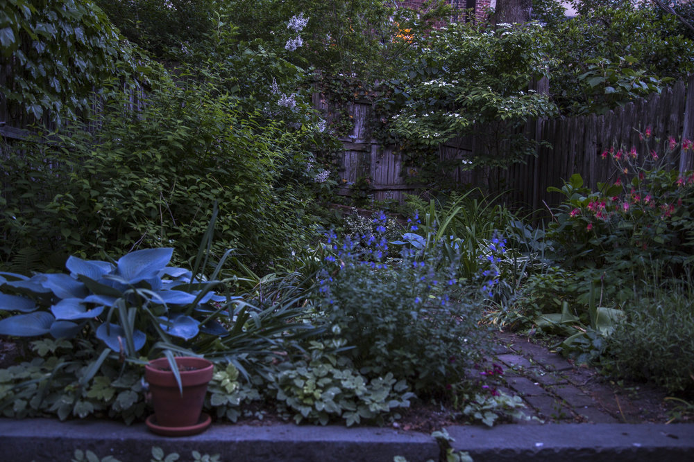 Garden-7692.jpg