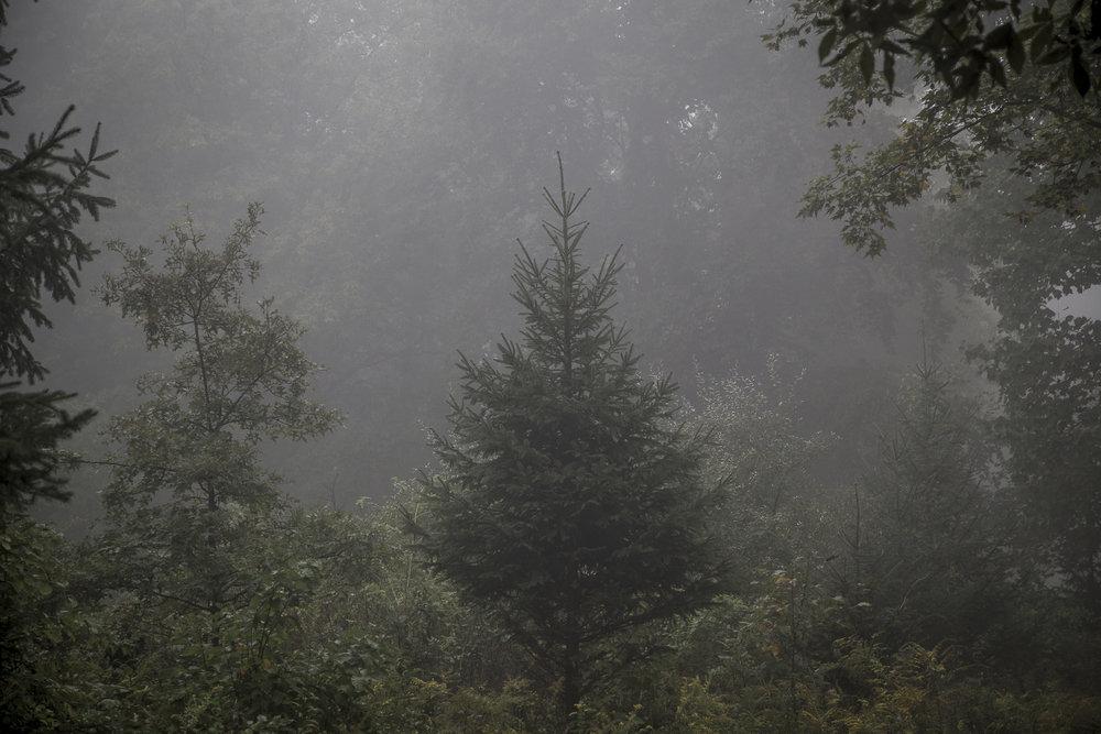 Fog-2762.jpg