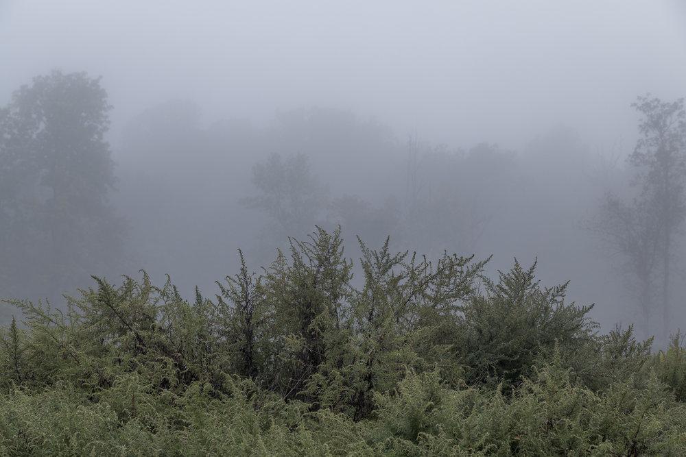 Fog-2774.jpg