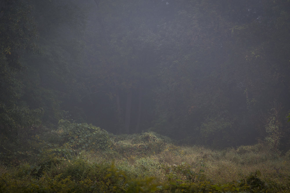 Fog-2782.jpg