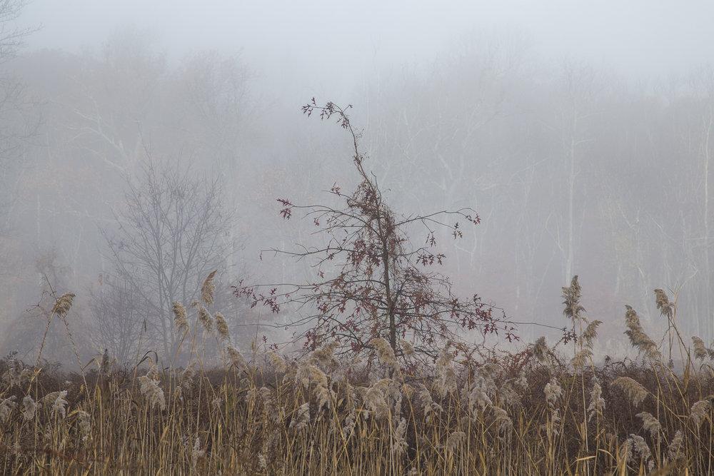 Fog-3498.jpg