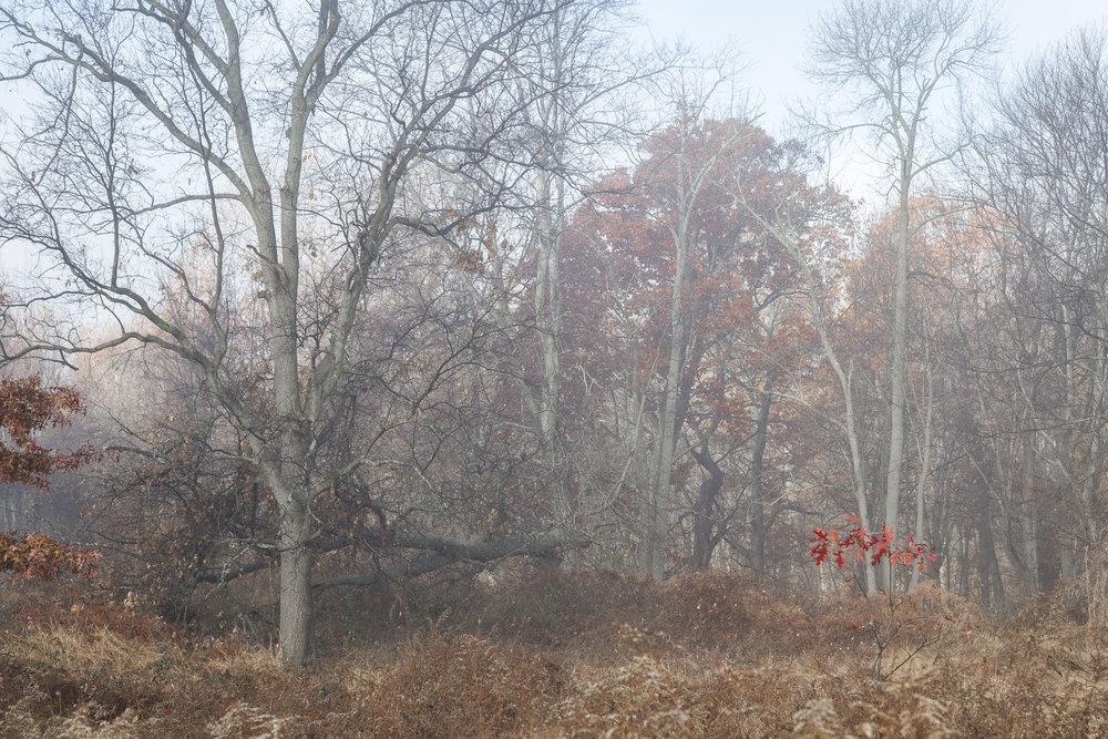 Fog-3510.jpg