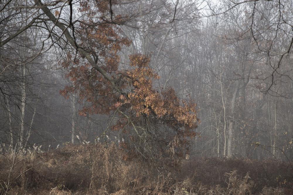 Fog-3512.jpg