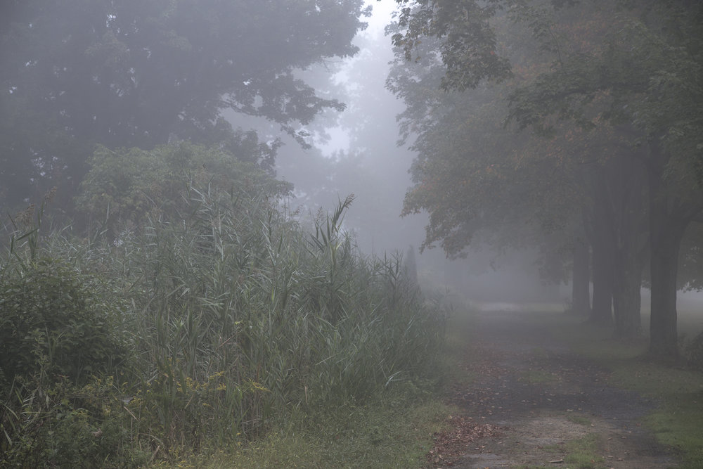 web fog-2764.jpg