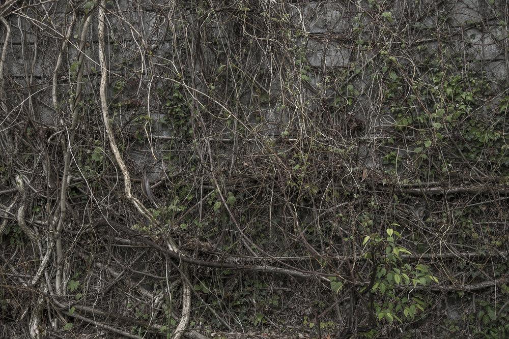 tangled-0308.jpg
