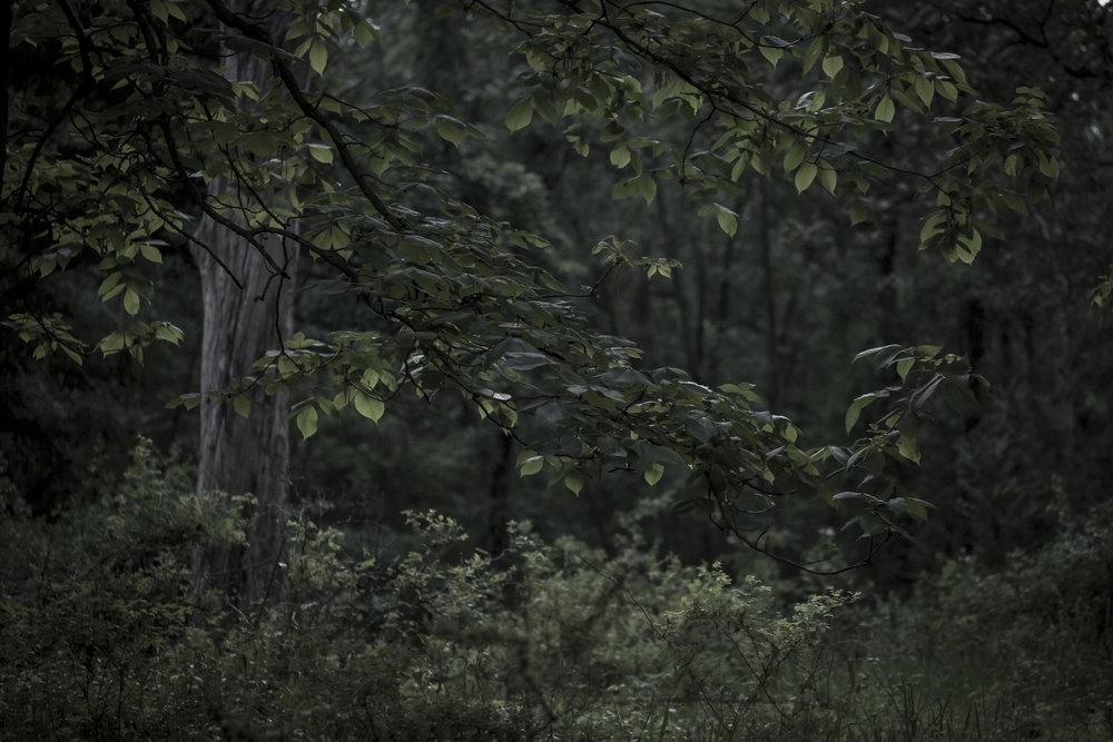 darker-1261.jpg