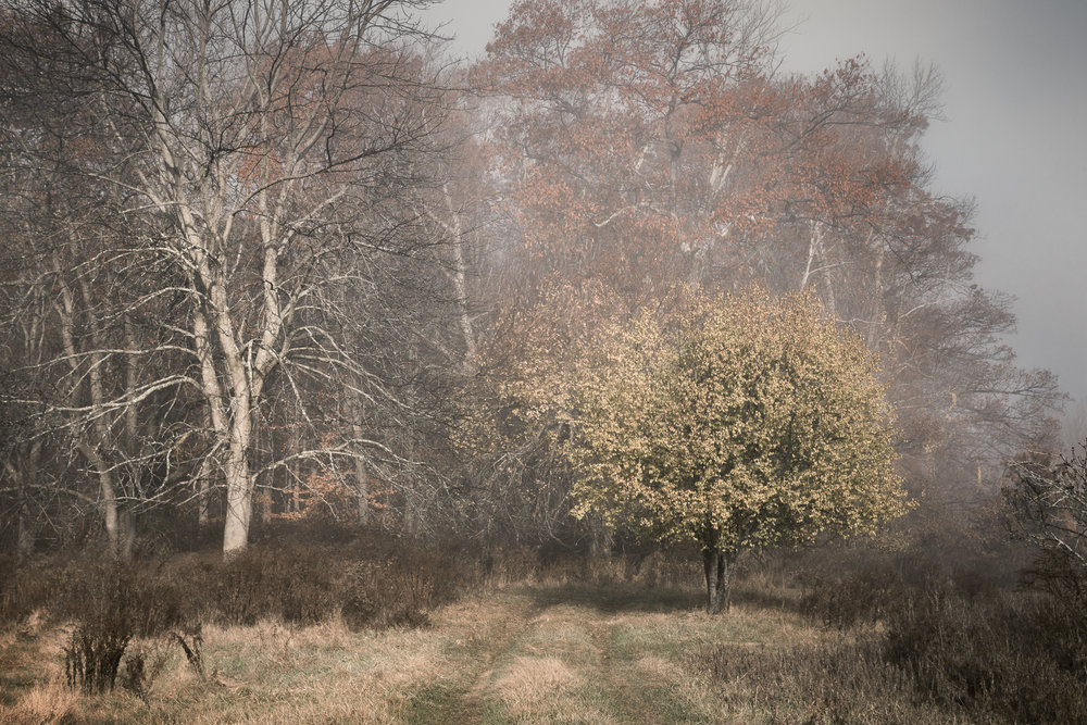 fog-16592016.jpg
