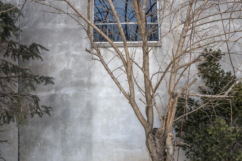 Wall-1937.jpg