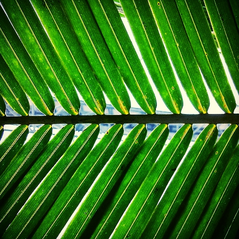 """Palm Frond"" by Felix Burton"