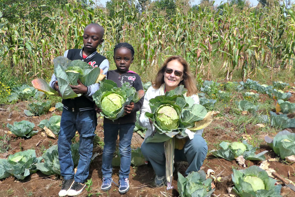 Cabbage! Crops to feed families
