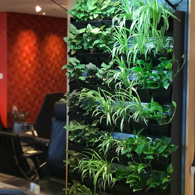 Who said anything about #mondayblues? We're seeing a whole lot of green today 💚☘️🌱🌿. Come check out our #livingwall at our CEI showroom, headquartered in the heart of downtown, Honolulu. #ceihawaii