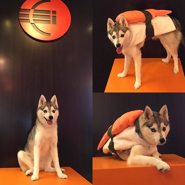 We love visits from our #ceihawaii mascot Miki! She's the cutest sushi in town 🍣. #halloween2017 #happyhalloween