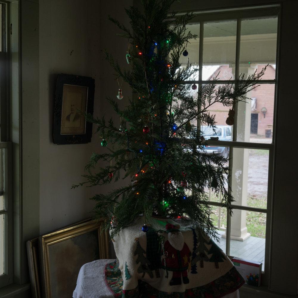 Xmas Tree, December 2015