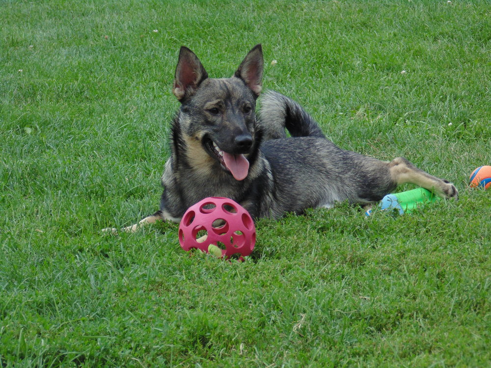 Stryker July 2015.jpg