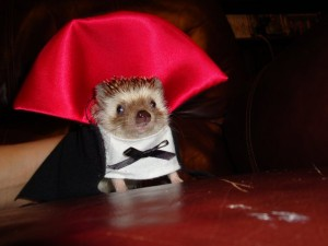 dracula hedgehog loves faeries