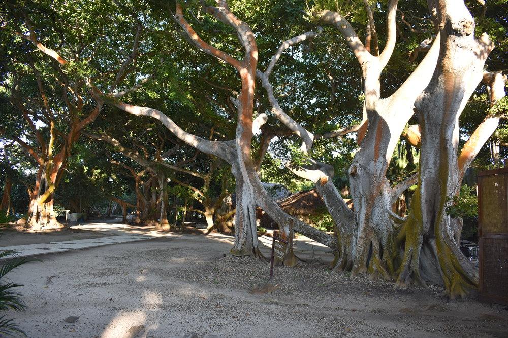 Muitas árvores e sombra em toda parte do hotel
