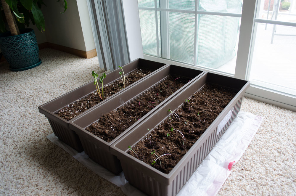 Urban Gardening - Winter Update