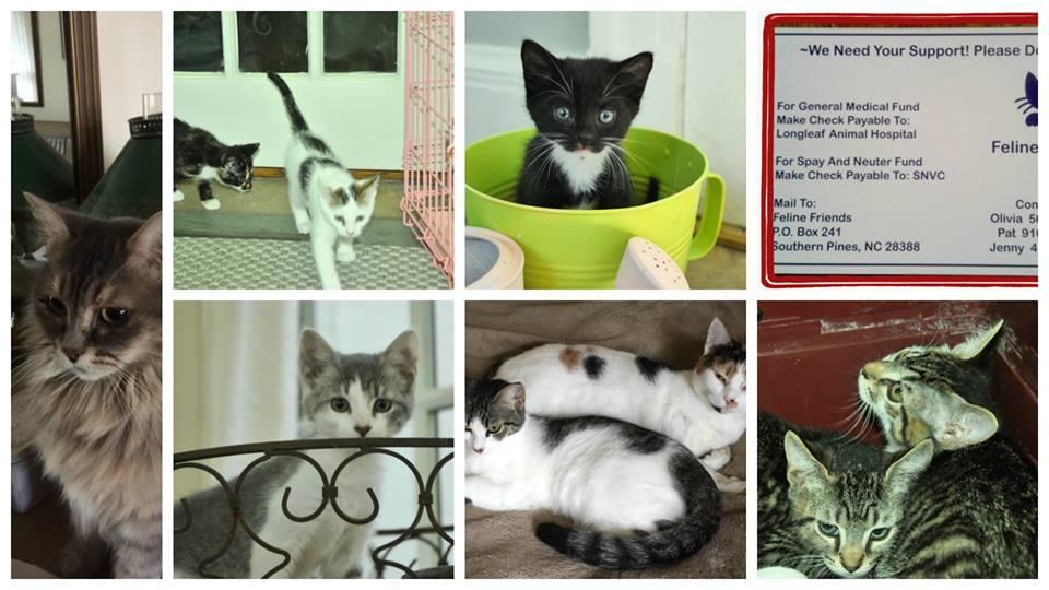 cat adoption event.jpg