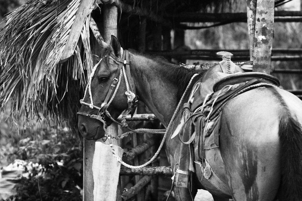 Our horse! La Terrazas, Cuba