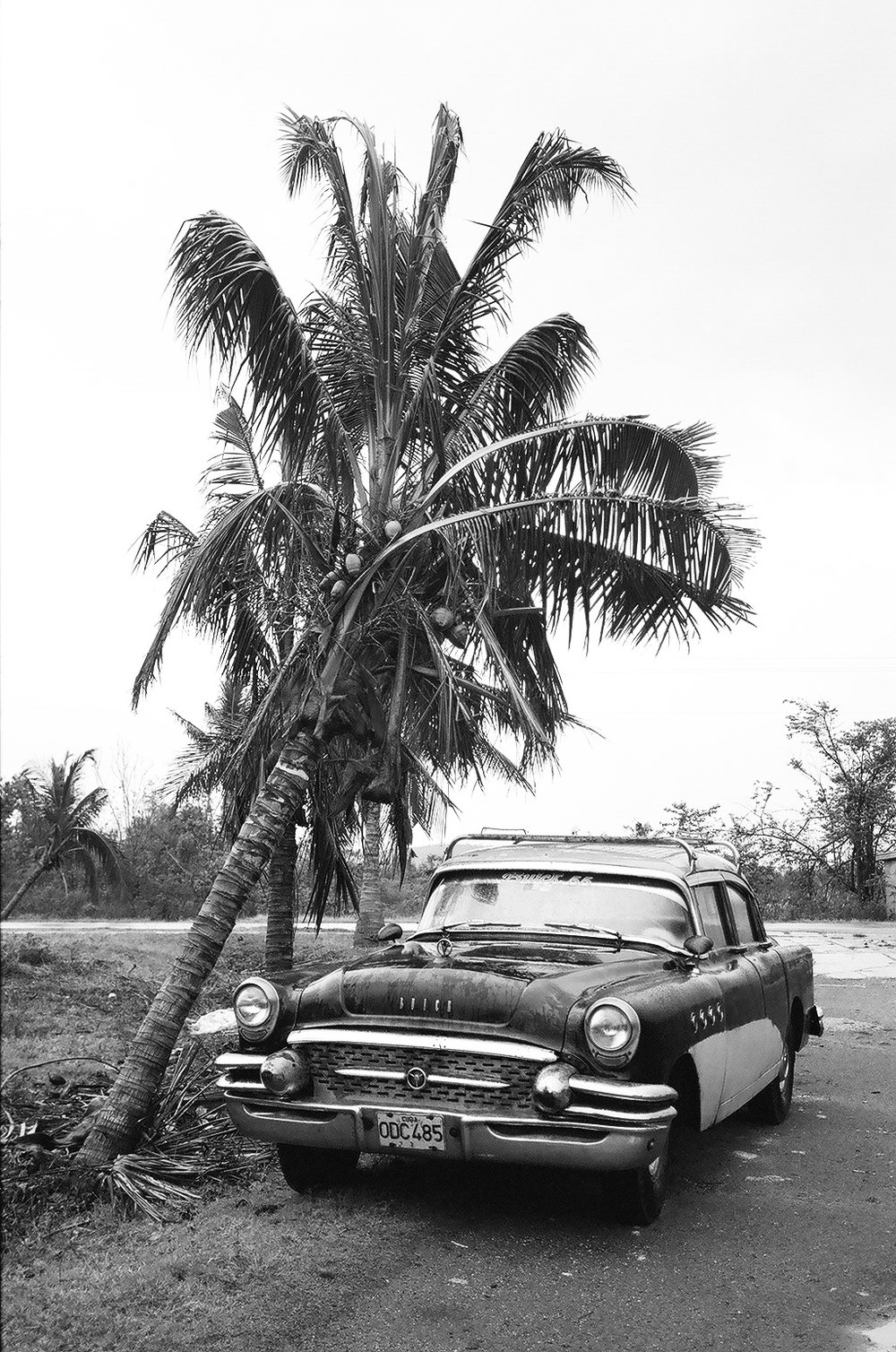 Old Cuban car by palm tree