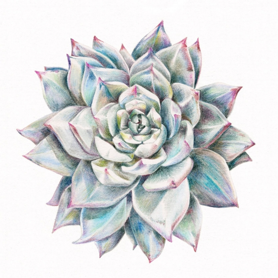 Charlotte's Succulent One which compliments these botanical tones of green