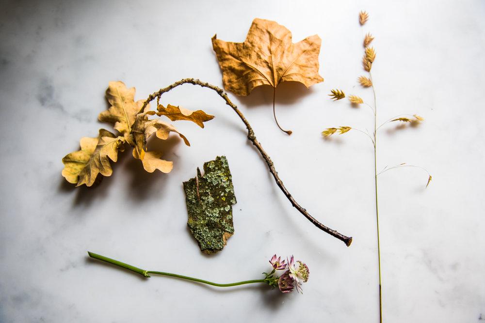 Autumn textures Donna Ford-1.jpg
