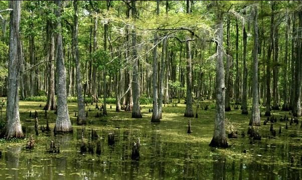 Not much food in this swamp.