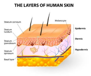 Photo Credit: www.skin-remedies.com/skin.html