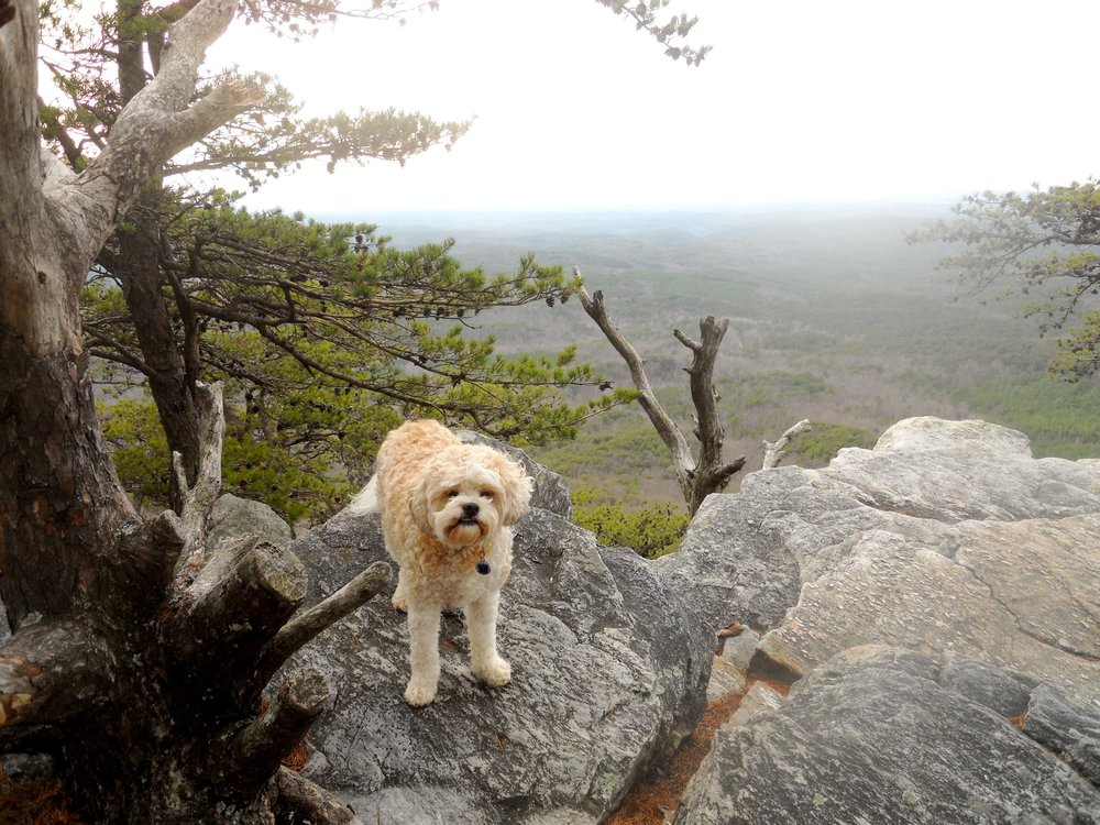 Cheaha State Park-Pulpit Rock