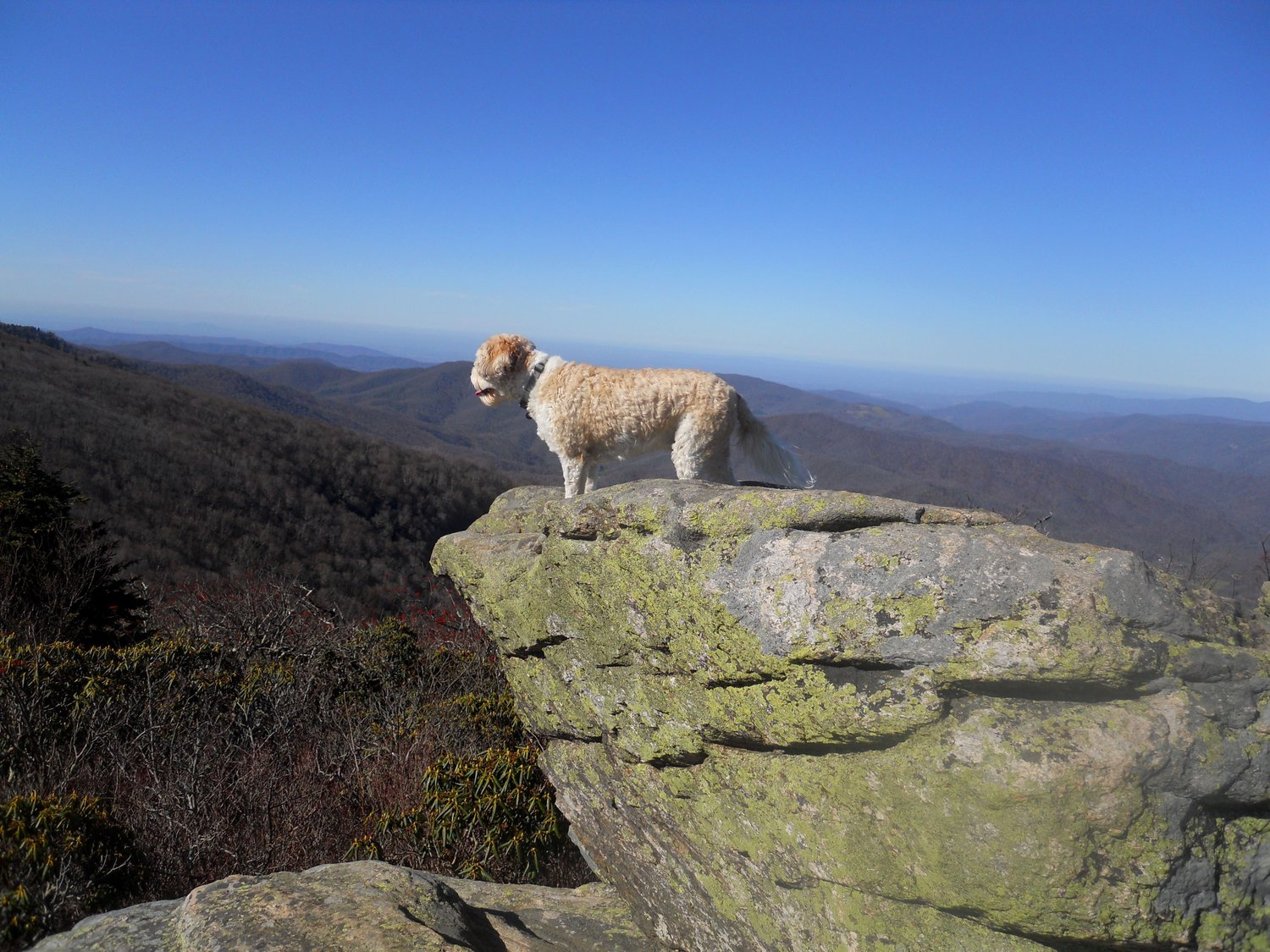 North carolina hike with your dog hike with your dog fandeluxe Images