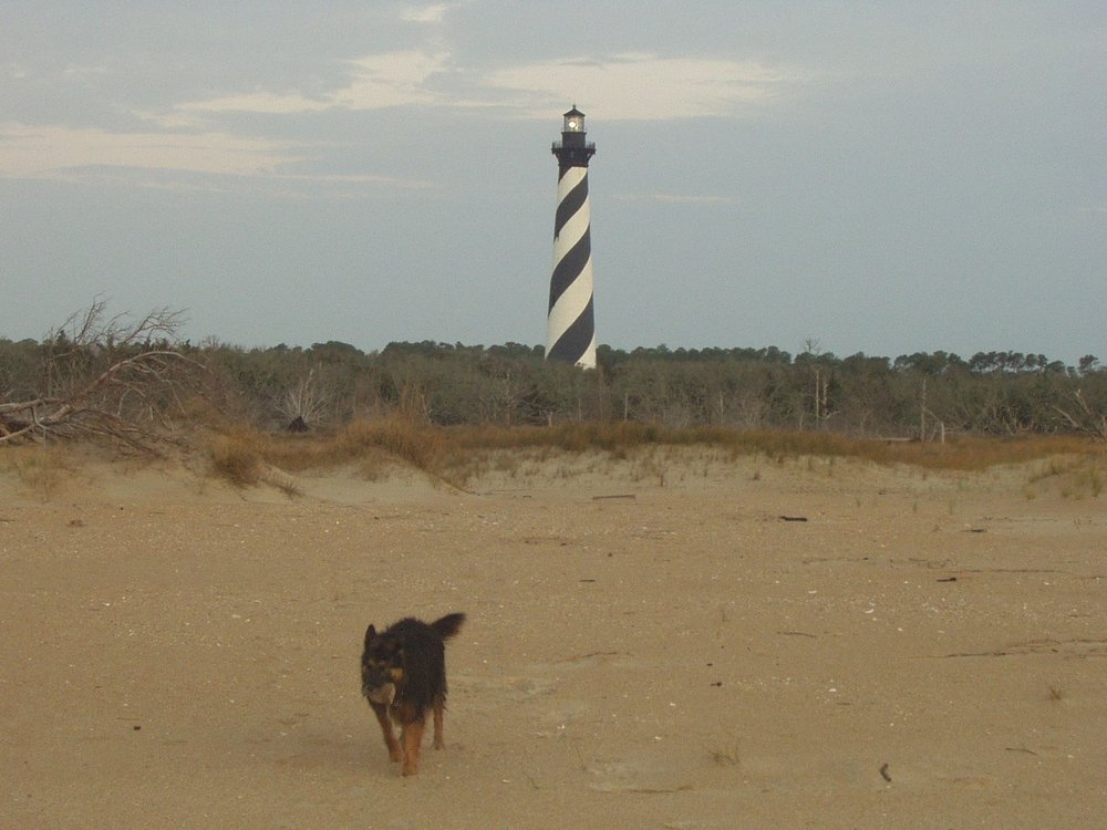 North carolina hike with your dog cape hatteras fandeluxe Images
