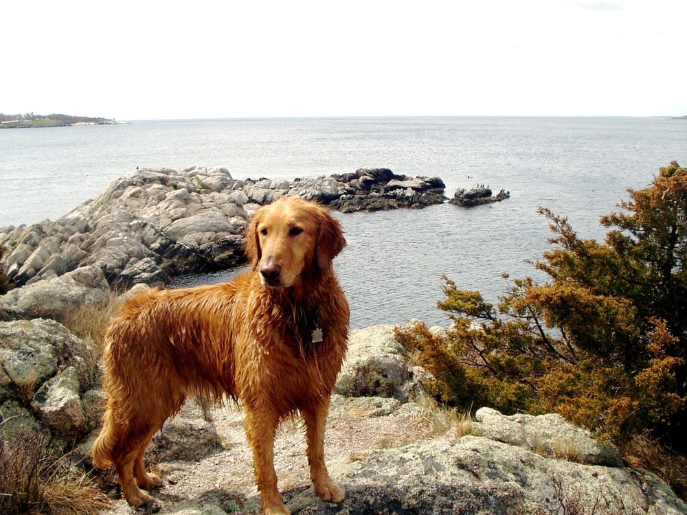 Beavertail State Park Dogs