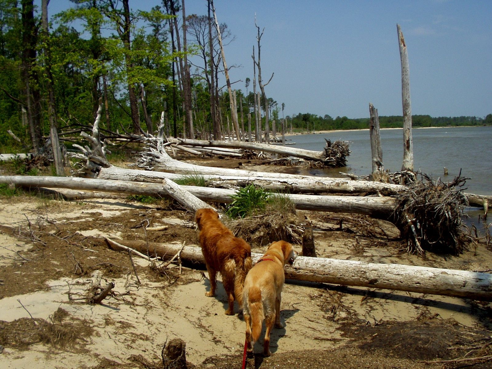 A Bark in the Park - Chesapeake — Hike With Your Dog