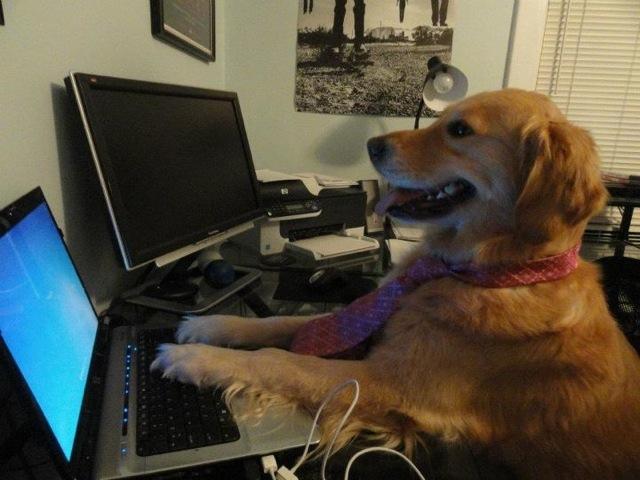 Computer-Dog-023.jpg