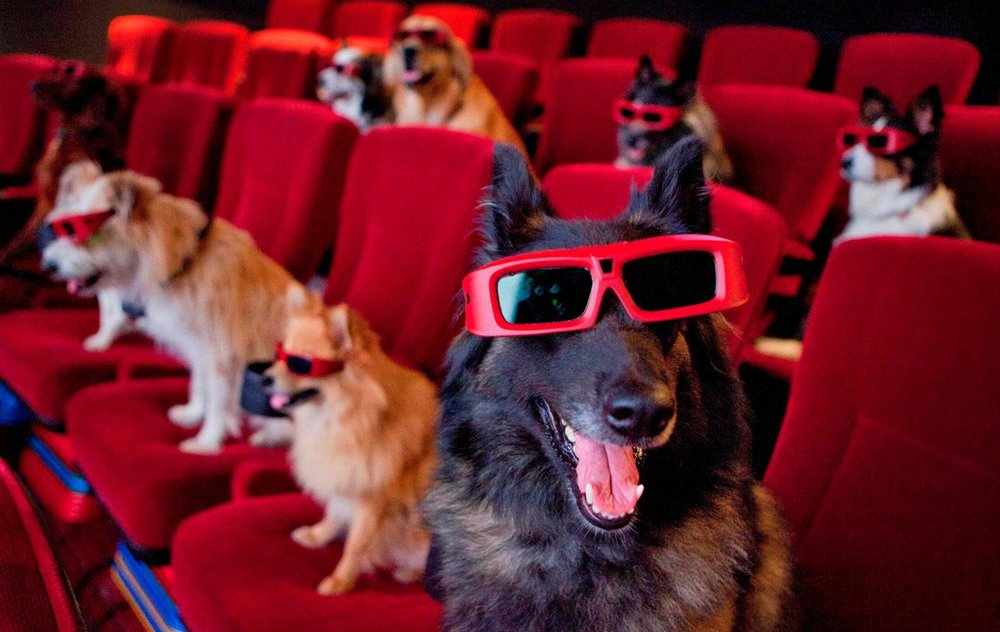 dog-movie-theater.jpg