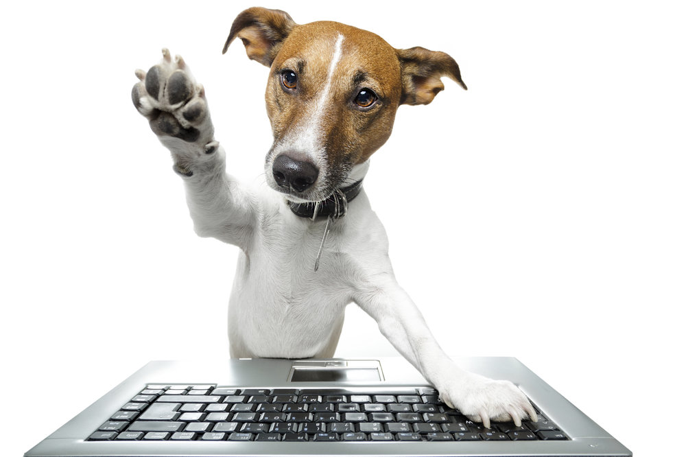 dog-computer.jpg