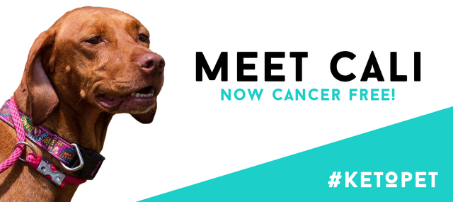 How A Ketogenic Diet Is Helping Dogs With Cancer The Bones Co